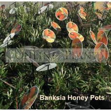 Banksia Honeypots