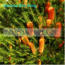 Banksia Bird Song
