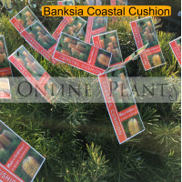 Banksia, Coastal cushion