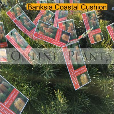 Banksia, Coastal cushion