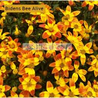 Bidens Bee Alive