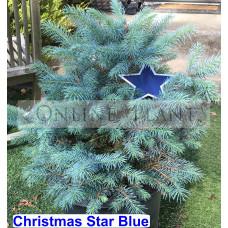 Christmas Star Blue