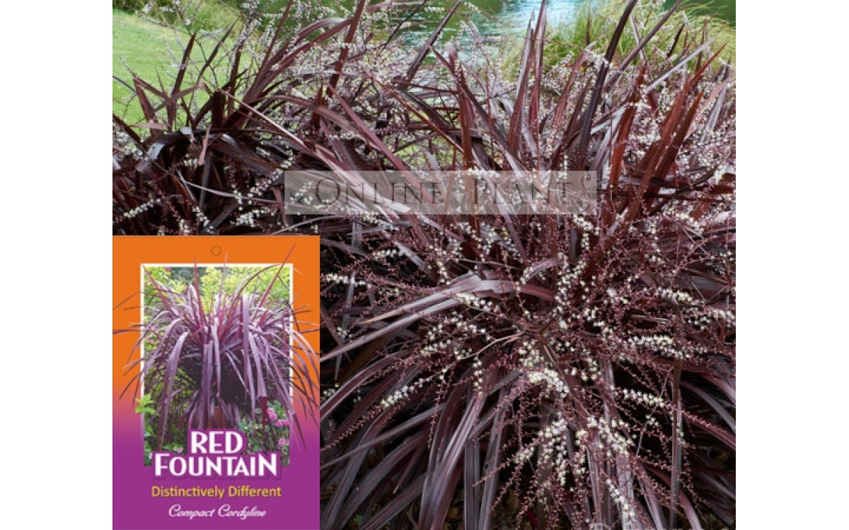 Landscaping with Tropical Plants, Cordylines