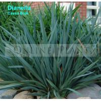 Dianella Cassa Blue