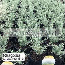 Rhagodia Aussie Flat Bush | Online Plants Melbourne, Australia