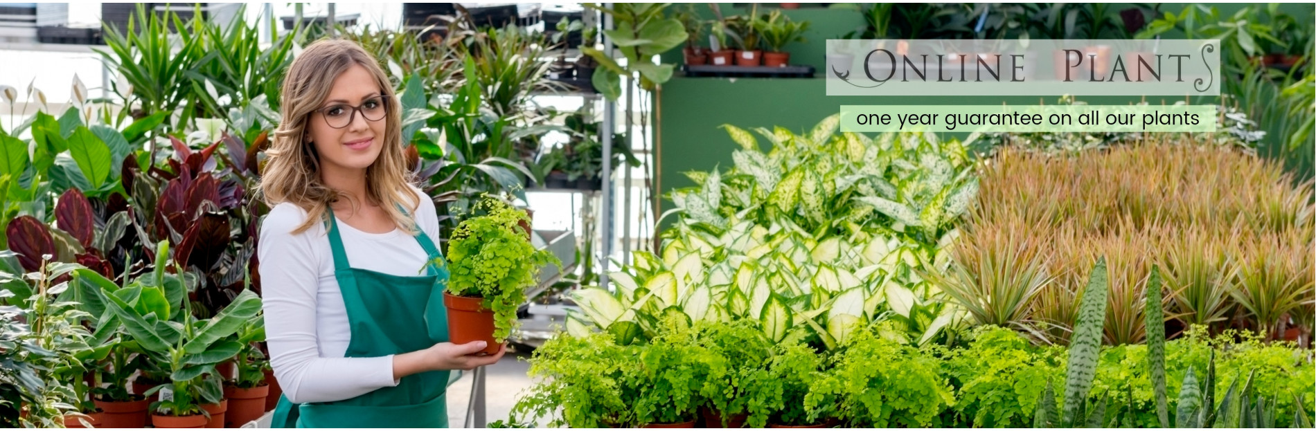 Online Plants: Australian Plants Online, Plant Nursery ...