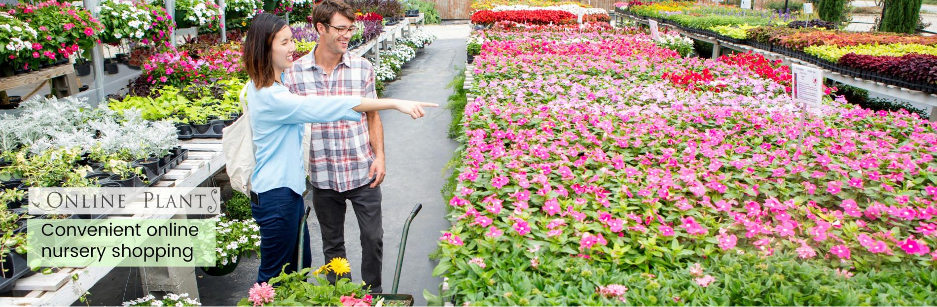 Online Plants Nursery