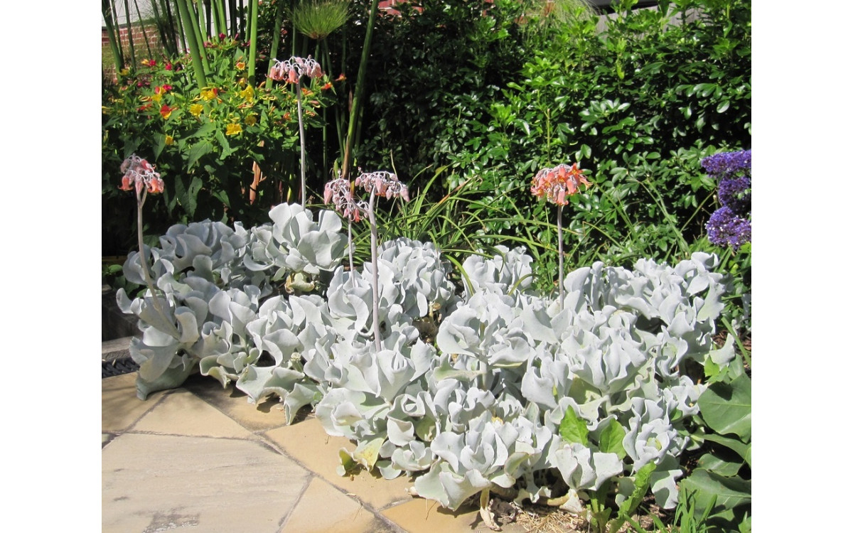 What are the best border plants for the garden?