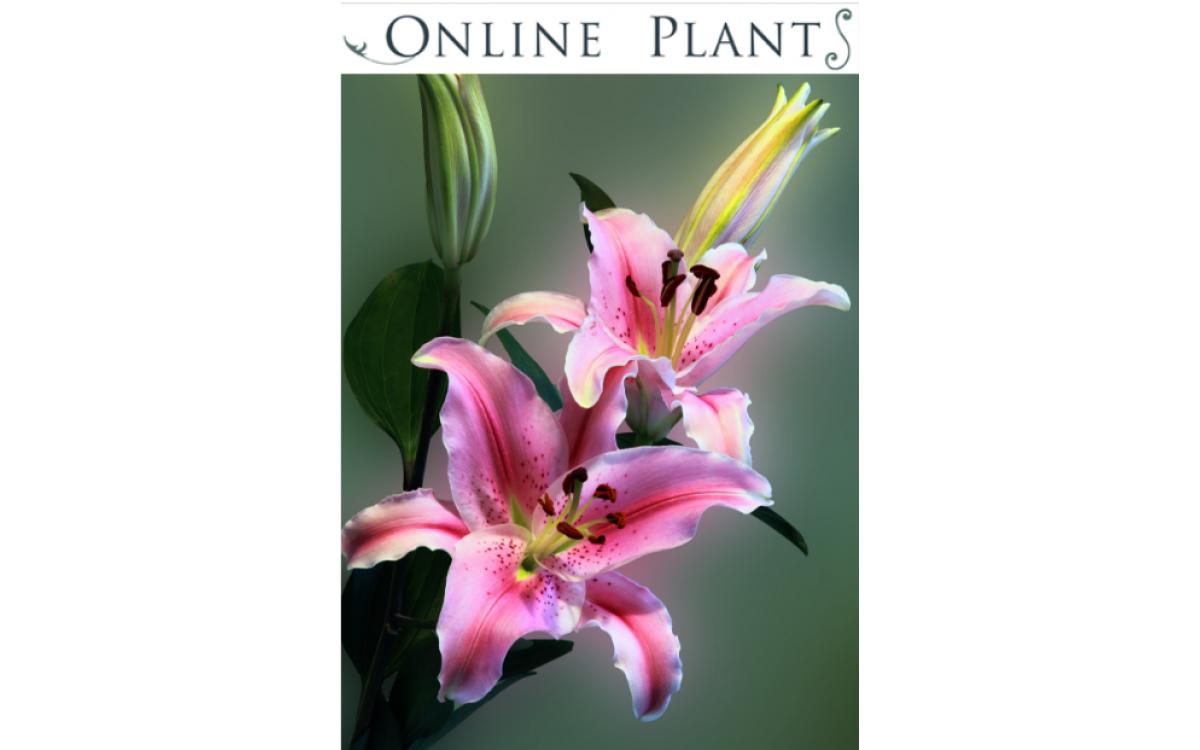 Best Place to Buy Plants Online in Australia - Online Plants