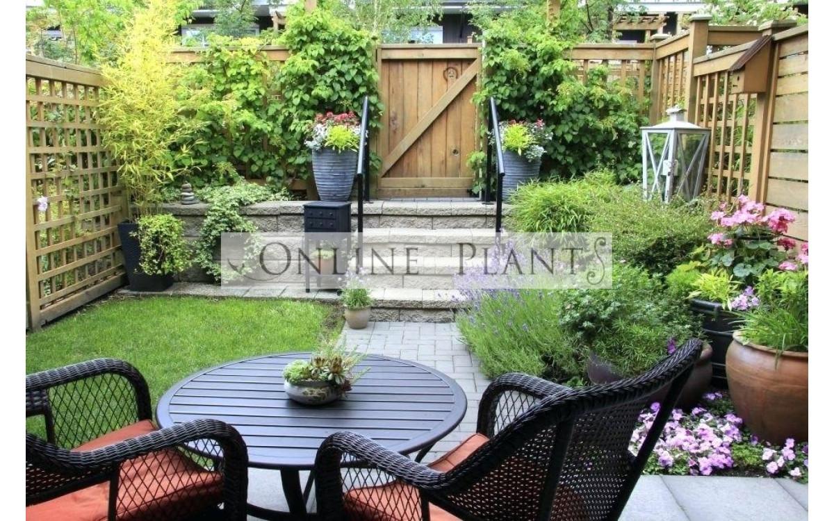 Best plants for Courtyard gardens