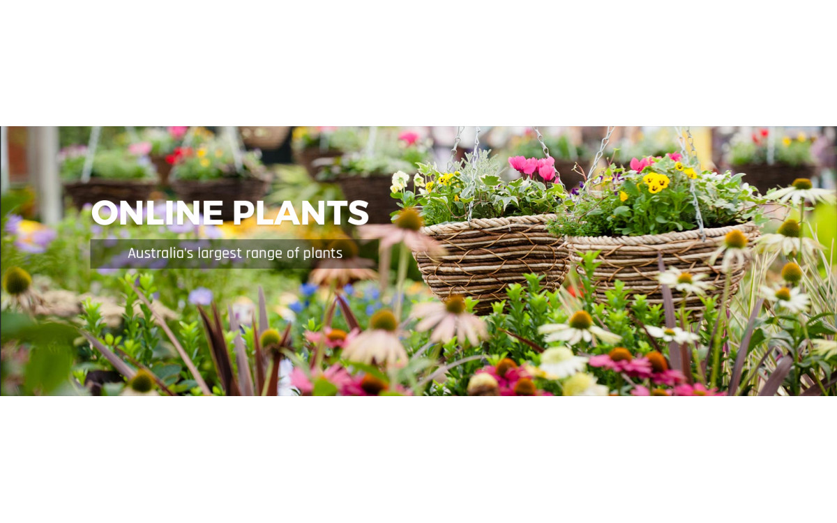 Plant Nurseries Are The Best To Buy Plants! – Here's Why?