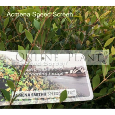 Acmena smithii Speed Screen