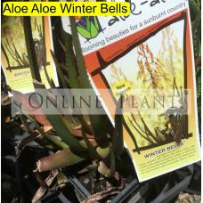 Aloe Aloe Winter Bells