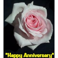Bush Rose, Happy Anniversary