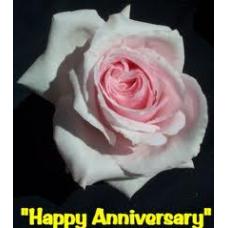 Bush Rose, Happy Anniversary