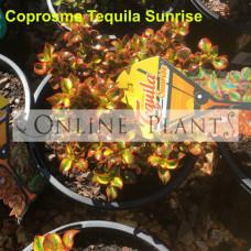 Tequila Sunrise Coprosma