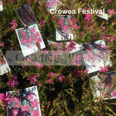 Crowea Festival