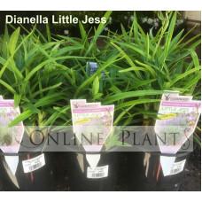 Dianella Little Jess