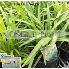 Dianella Breeze