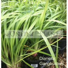 Dianella Gangbusters