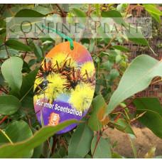 Eucalyptus Summer Sensation
