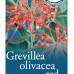 Grevillea Olivacea