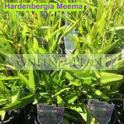 Hardenbergia Meema