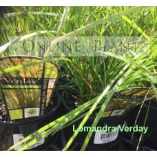 Lomandra Verday