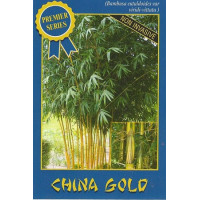 Bamboo China gold