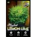 Nandina Magical LEMON LIME®  Nandina domestica alba 'Lemlim'