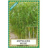 Himalayacalamus porcatus Nepalese blue bamboo